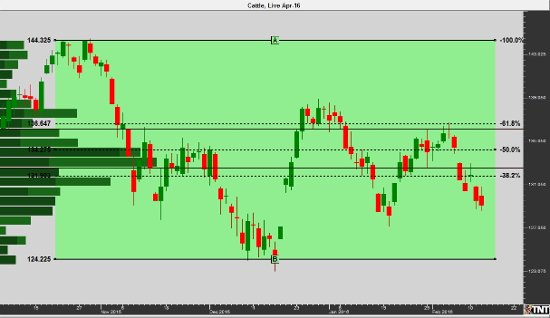 Cattle Daily