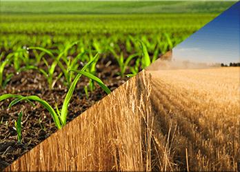 Old Crop vs New Crop Futures
